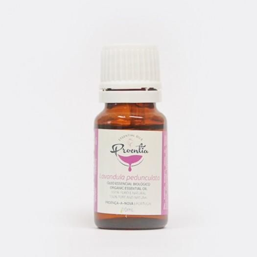 Lavandula Pedunculata Essential Oil